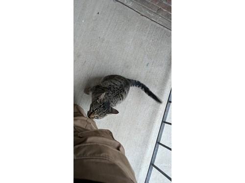Found Pet #58872