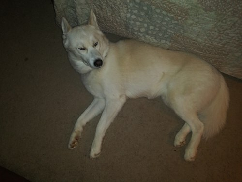 Lost Pet #128838