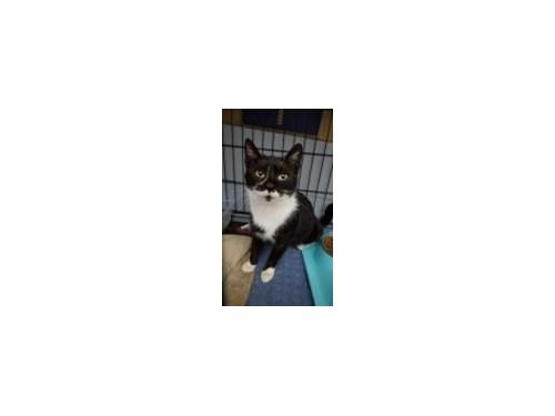 Lost Pet #126594