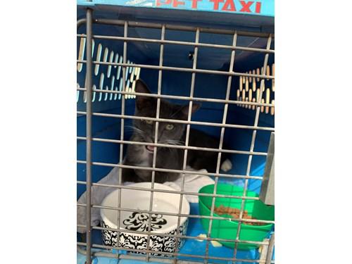 Found Pet #59722