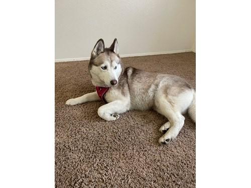 Found Pet #59733