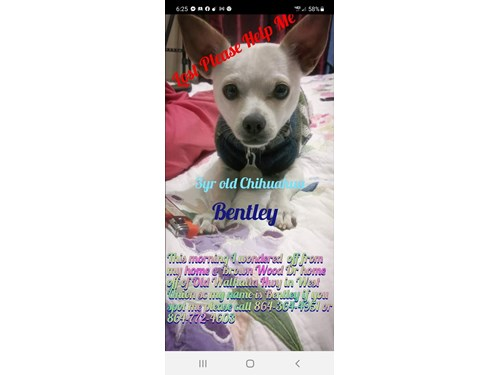 Lost Pet #123675