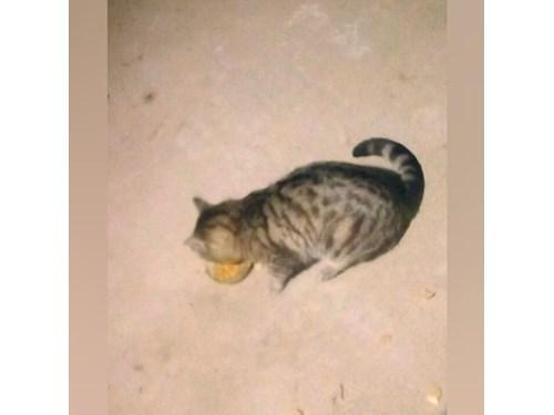 Found Pet #60335