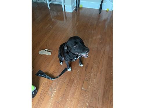 Found Pet #60340