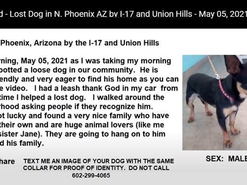 Found Pet #60368