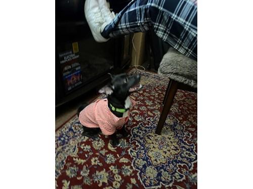 Lost Pet #127257