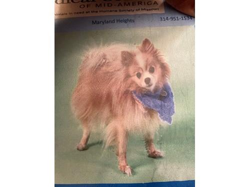 Lost Pet #127285