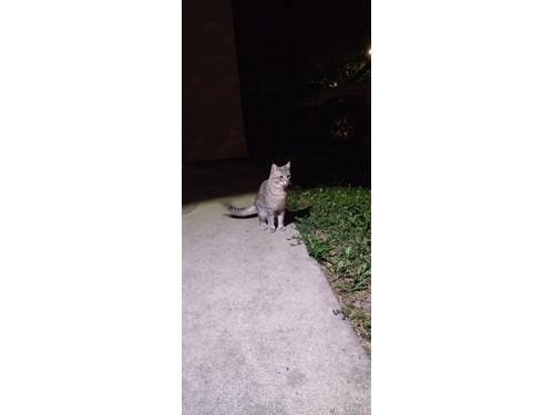 Found Pet #60903