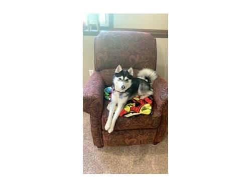 Lost Pet #128841