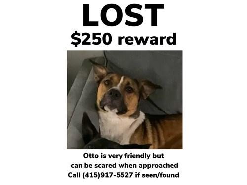 Lost Pet #128843