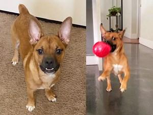 Bospin-DOG-Male--2958209