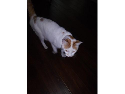 Found Pet #61501