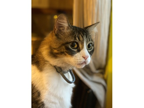 Lost Pet #131038