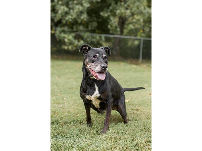Mixed Breed-DOG-Female-Black-3241891-img2