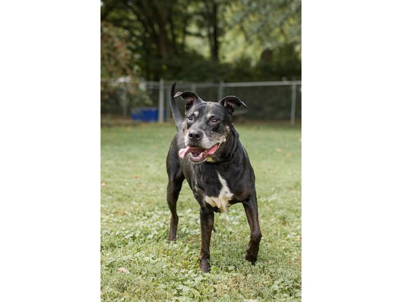 Mixed Breed-DOG-Female-Black-3241891-img3