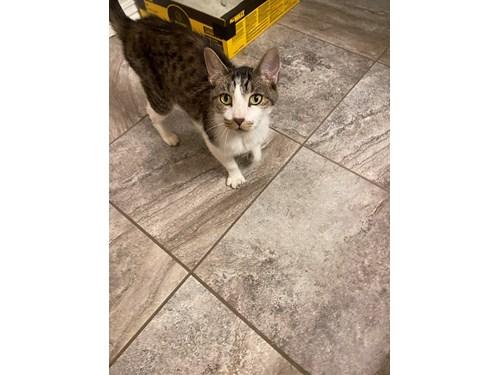 Found Pet #61989