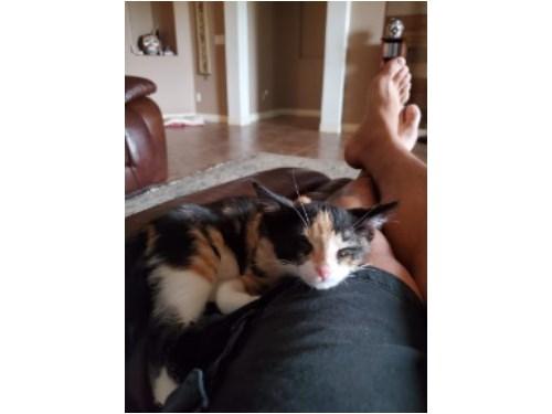Lost Pet #132813