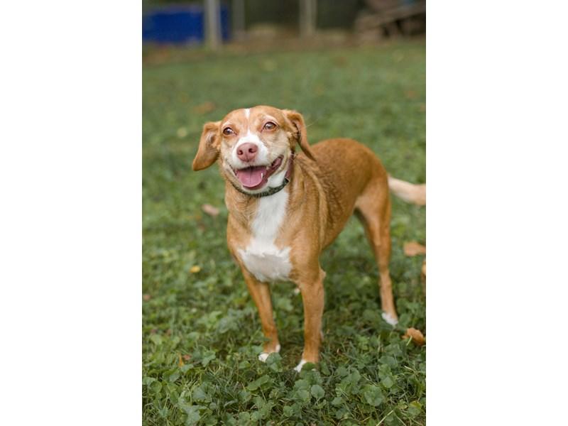 Mixed Under 30-DOG-Female-red-2406974-img2