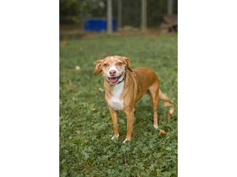 Mixed Under 30-DOG-Female-red-2406974-img3