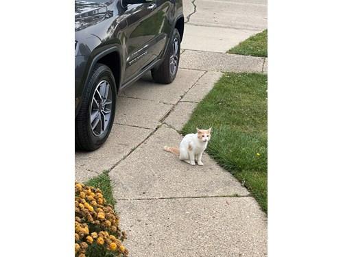 Found Pet #62043