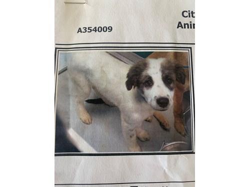Lost Pet #133141