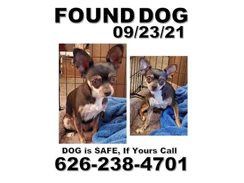 Found Pet #62089