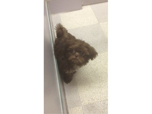 Brownie A Lost Dog Is Missing In Wichita Ks 67214
