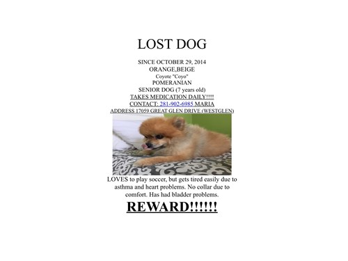 Coyote, a lost dog, is missing in Houston, TX 77084