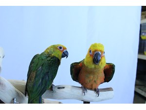 Pet Birds for Sale - Petland Tyler, Texas