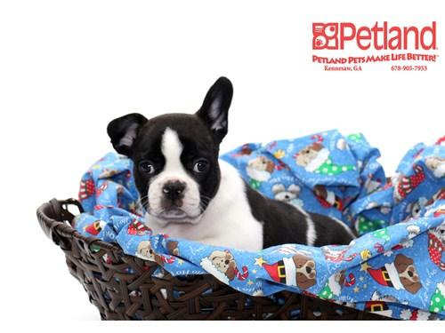 Lost Pet #91267