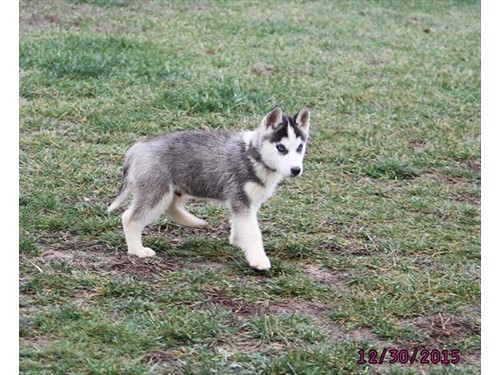 Lost Pet #95598