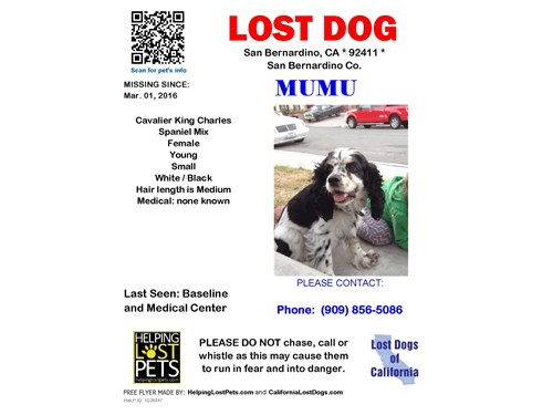 Mumu, a lost dog, is missing in San Bernardino, CA 92407