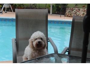 Lost Pets Near 32506 (Pensacola, FL)