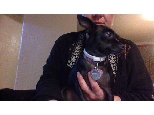 Lost Pet #122052