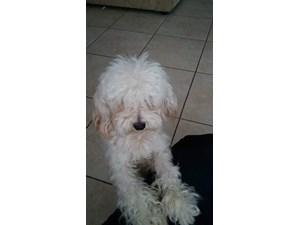 Lost Pets Near 78754 (Austin, TX)