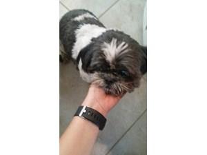 Lost Pets Near 78239 (San Antonio, TX)
