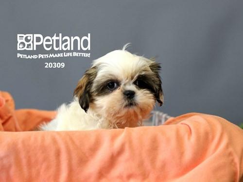 Lost Pet #127301